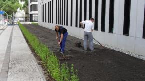 Zagospodarowanie terenów zielonych